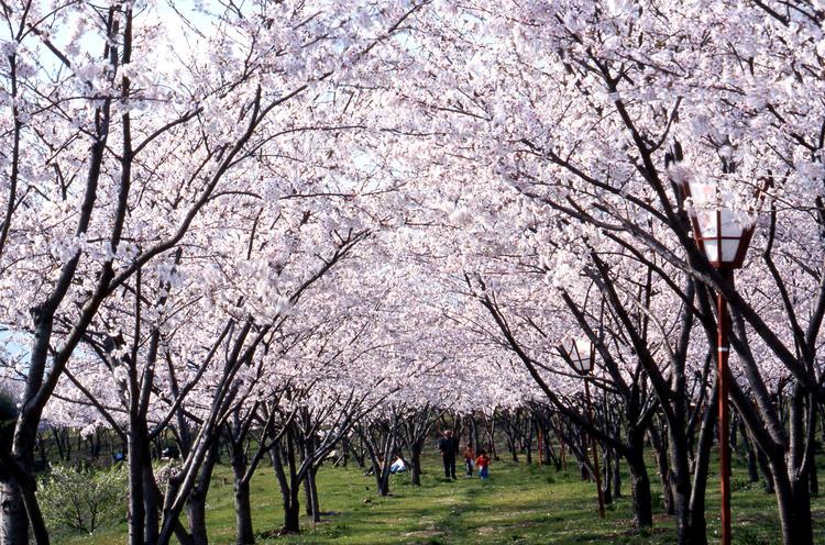笠原桜公園