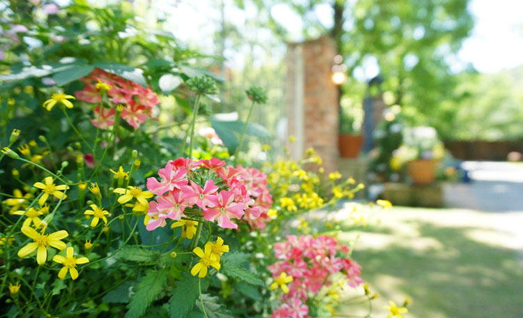 rb-バラと宿根草の庭-門前.jpg