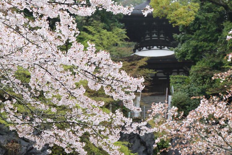 3950_雨の石山寺.jpg