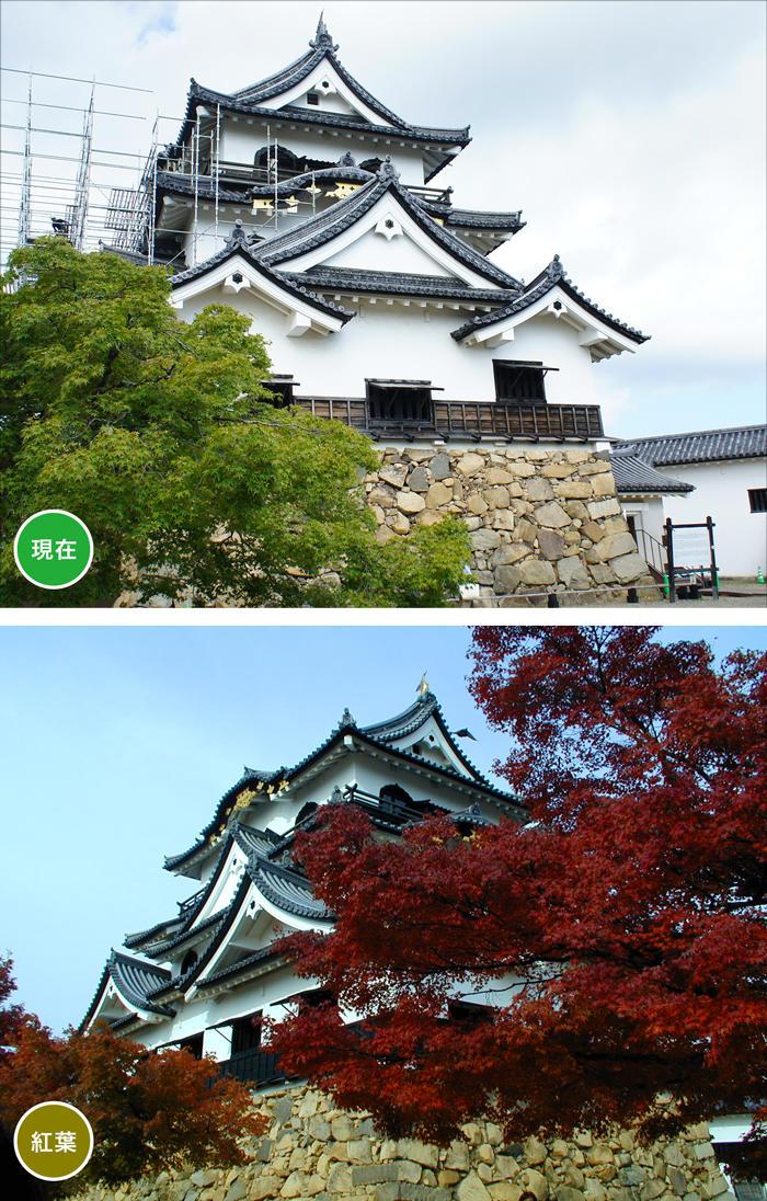 http://www.biwako-visitors.jp/staff/blog/8e84385246e04be9e3df5cd86b9ec40cb8ade2e8.jpg