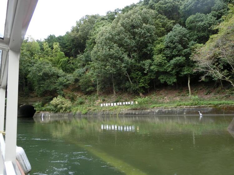 びわ湖疏水船 鷺