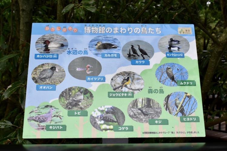 琵琶湖博物館樹冠トレイル3