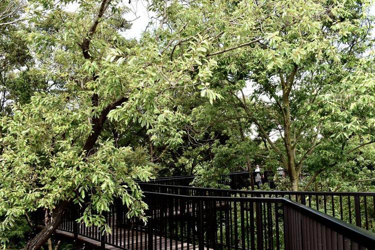 琵琶湖博物館樹冠トレイル2