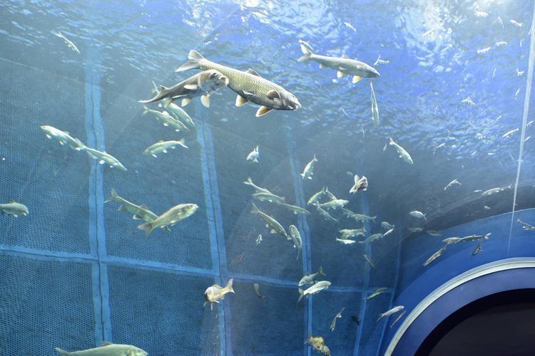 琵琶湖博物館1