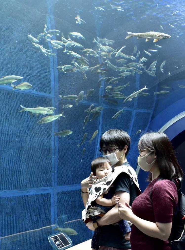 琵琶湖博物館3