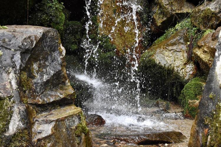 日吉大社境内の水2