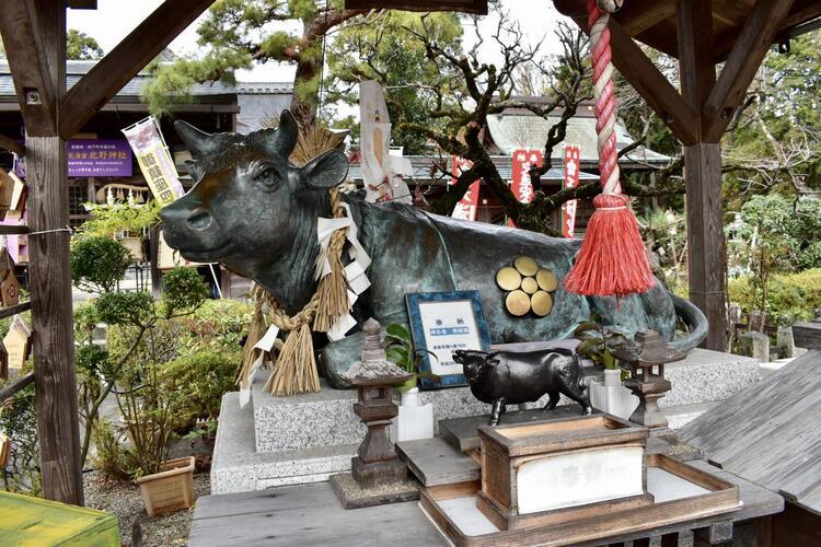北野神社牛1