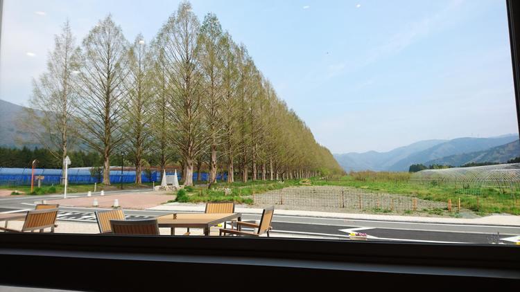 並木カフェ1