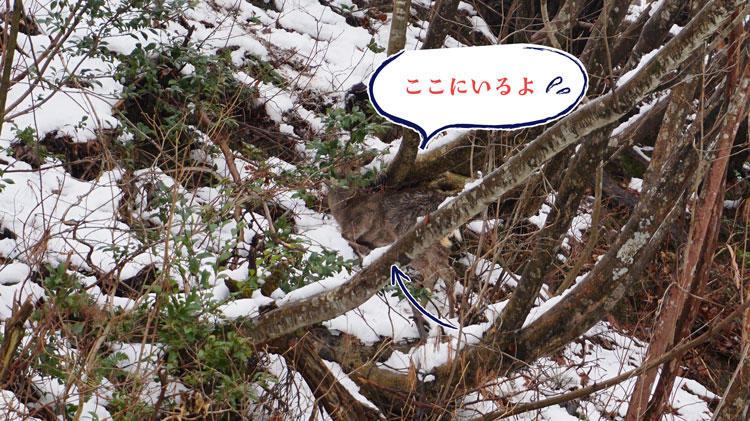 鹿位置.jpg