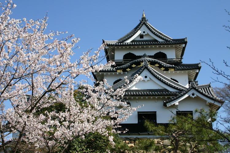 彦根城1.jpg