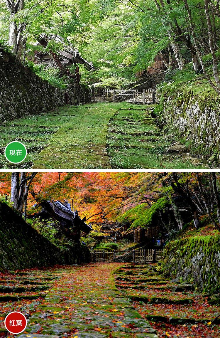 百済寺-坂.jpg