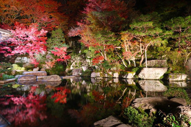 百済寺ライトアップ.jpg