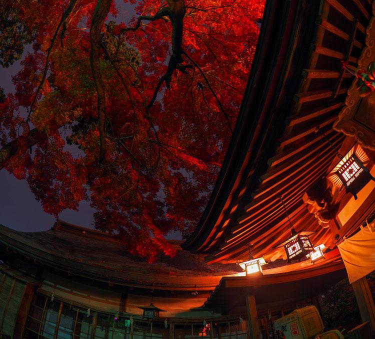 11363_夜の紅葉太郎坊.jpg