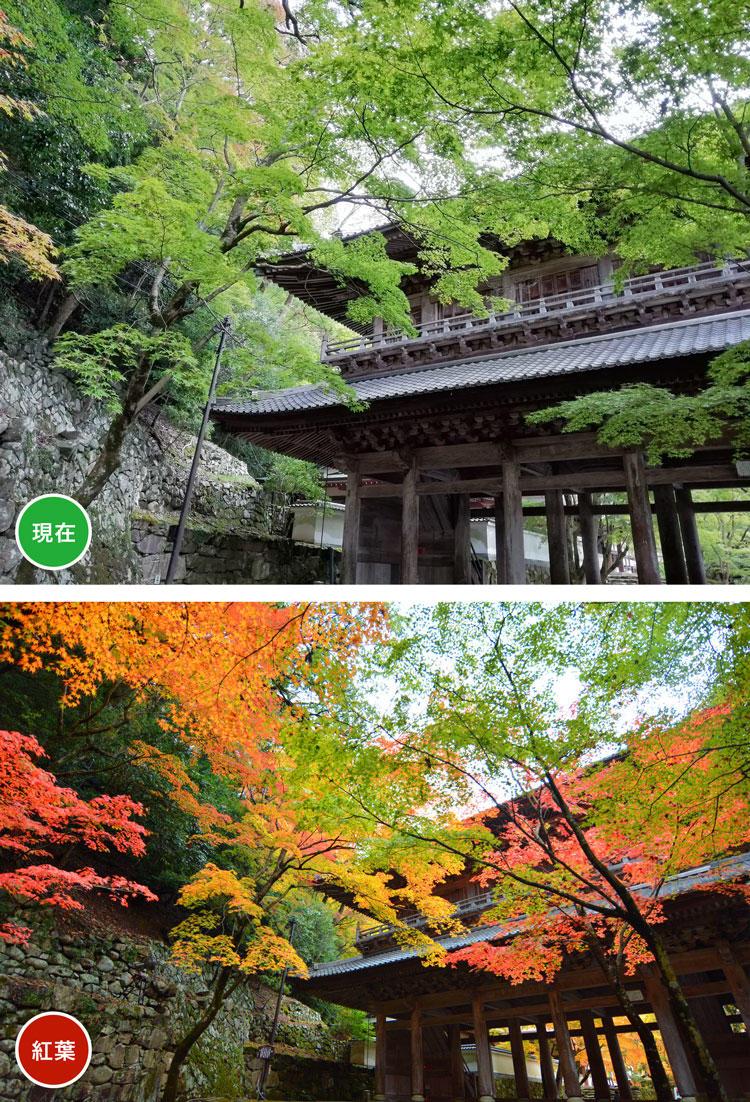 永源寺-門.jpg