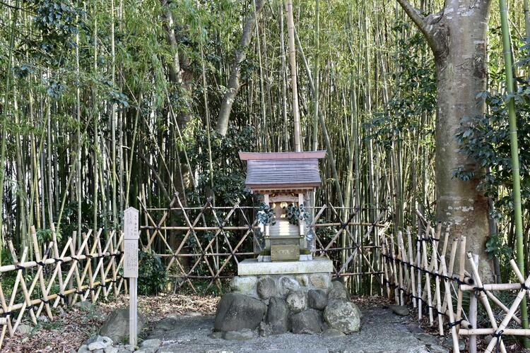 豊満神社竹藪