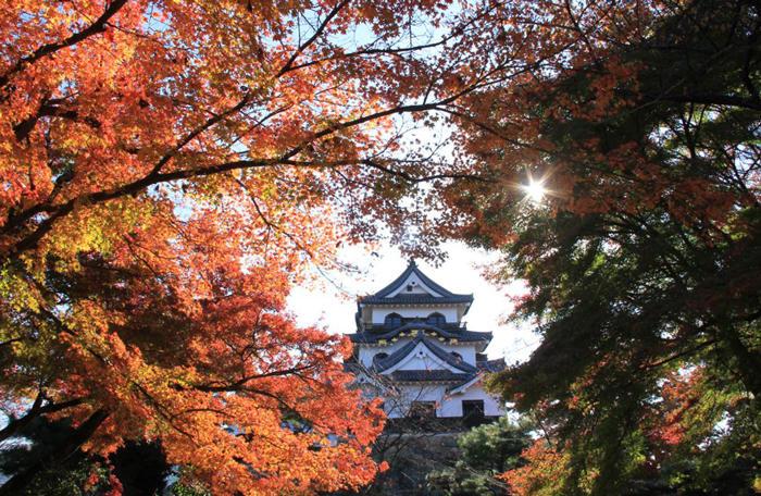 http://www.biwako-visitors.jp/staff/blog/bace0cd68e0227942157ee4097434f76310c364b.jpg