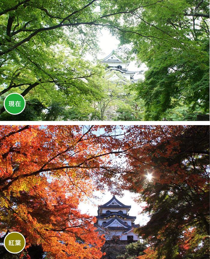 http://www.biwako-visitors.jp/staff/blog/dd41b4f62a4cfccd77c6ddd220a05977cbc9f772.jpg