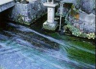 名水—十王水 | 滋賀県観光情報[公式観光サイト]滋賀・びわ湖のすべてがわかる!